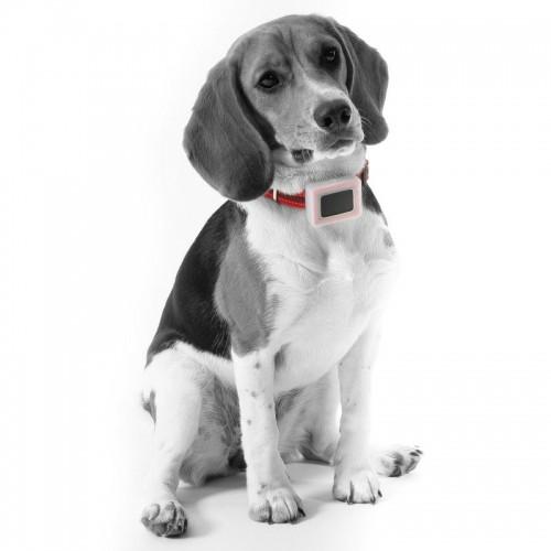 Collier, laisse et harnais - Système de localisation Moov pour chiens