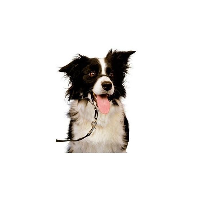collier pour chien licol