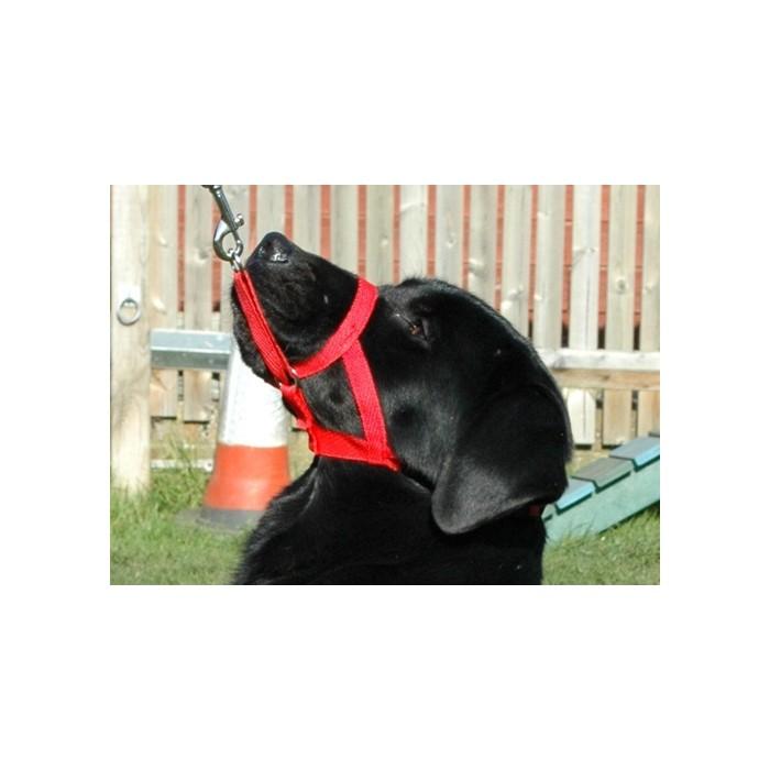 Comportement éducation - Licol Halti pour chiens