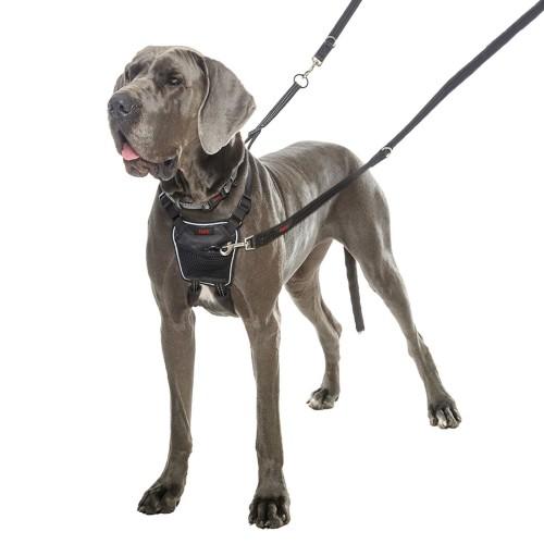 Comportement éducation - Harnais Non-Pull pour chiens