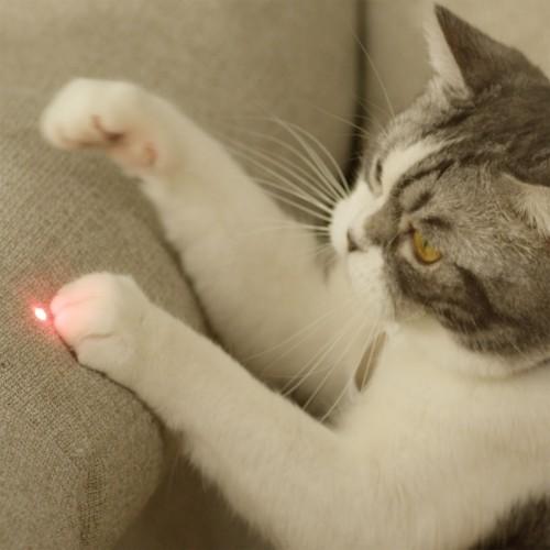Jouet pour chat - Tour connectée multifonction Mate pour chats