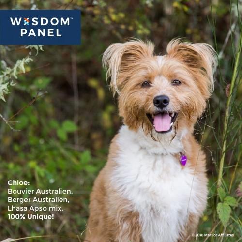 Accessoires chien - Wisdom Panel 2.0 pour chiens