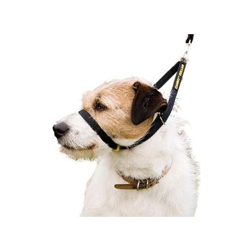Marche en laisse / Education du chien - Licol Canny Collar