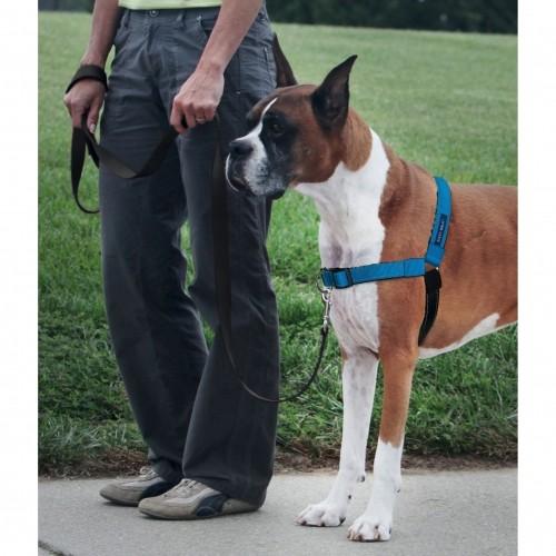 Collier, laisse et harnais - Parure harnais et laisse Deluxe Easy Walk pour chiens