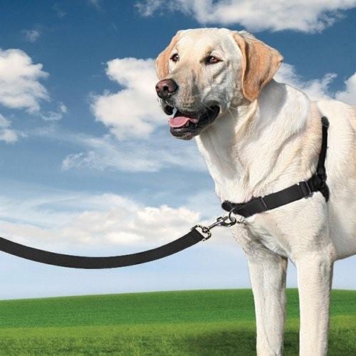 Collier, laisse et harnais - Harnais Easy Walk™  pour chiens