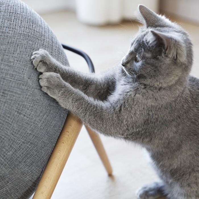 Couchage pour chat - Dôme La Ball pour chats