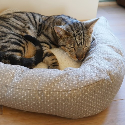 Couchage pour chat - Panier Dotty pour chats