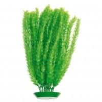 Plante pour aquarium - Plante Saule Rosewood
