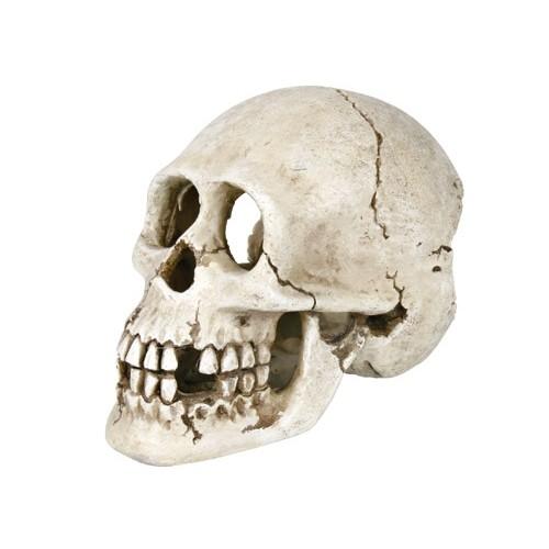 Décoration pour aquarium - Crâne pour aquarium pour poissons
