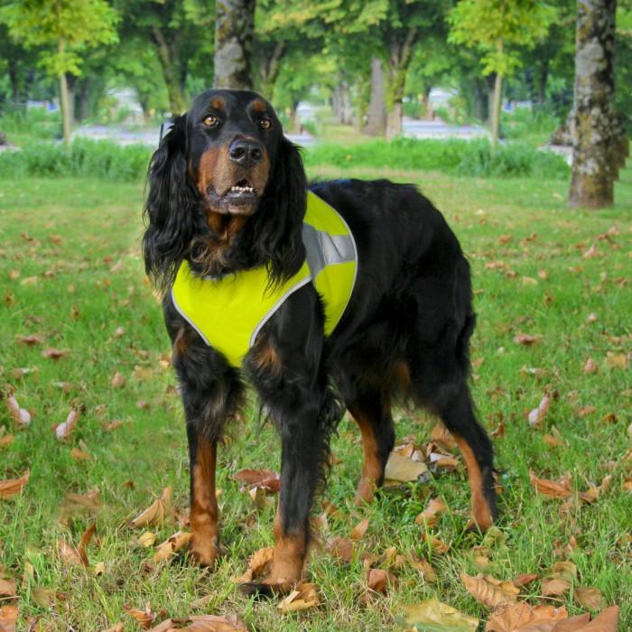 Sécurité et protection - Gilet de sécurité réfléchissant Canisport pour chiens