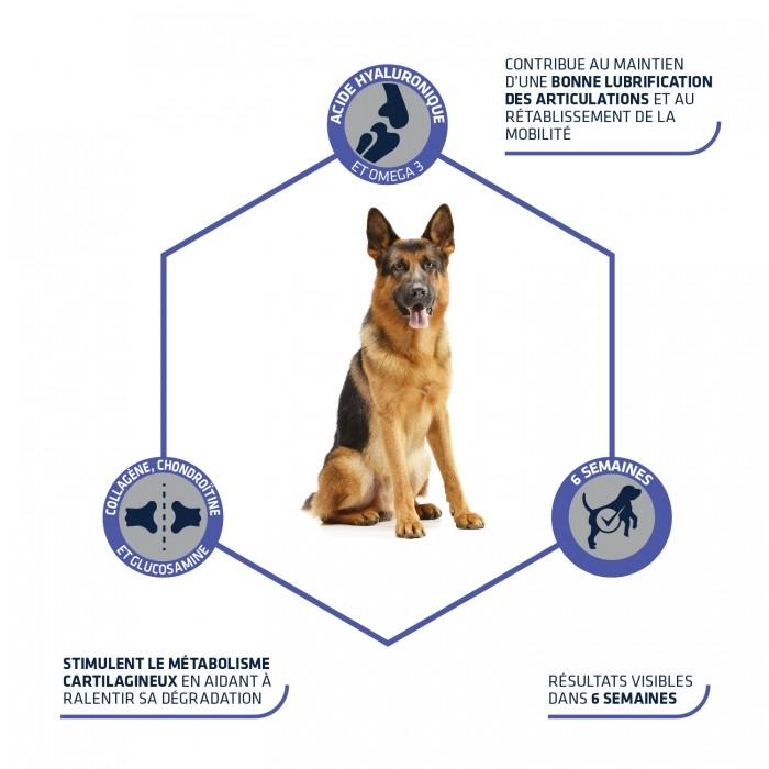 Boutique senior - Articular Stick, protège les os et articulations pour chiens