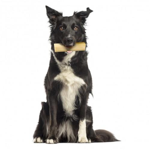Friandise & complément - Cheese Bone pour chiens