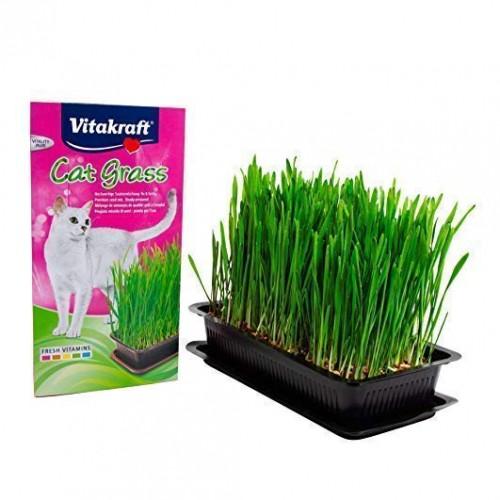 Sélection Printemps - Herbe à chat Cat-Gras pour chats