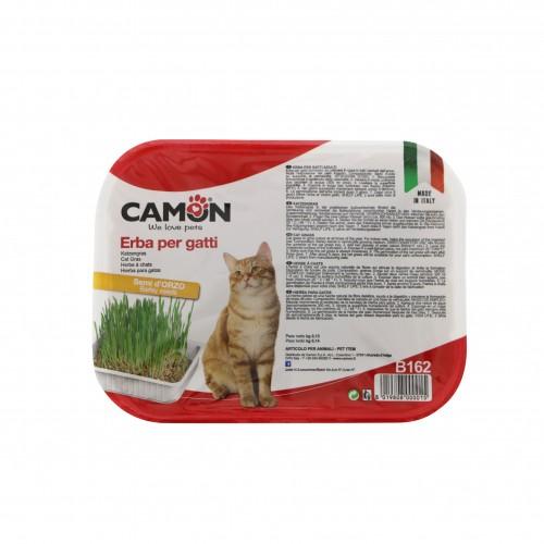 Friandise & complément - Herbe à chat aux graines d'orge pour chats