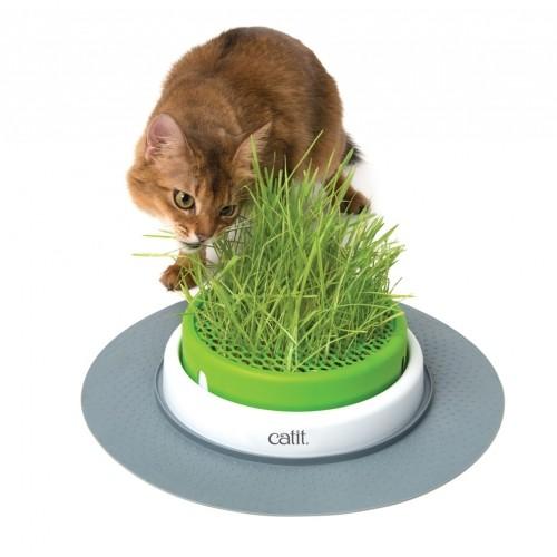 Friandise & complément - Jardin d'herbe Senses Design pour chats