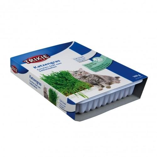 Friandise & complément - Herbe à chat pour chats