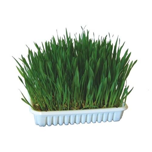 herbe à faire pousser - friandise pour rongeur - trixie / wanimo