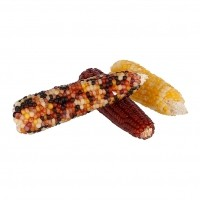 Friandise pour rongeur et lapin - Mini épis de maïs Kerbl
