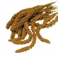 Friandises pour oiseau - Millet jaune Vadigran