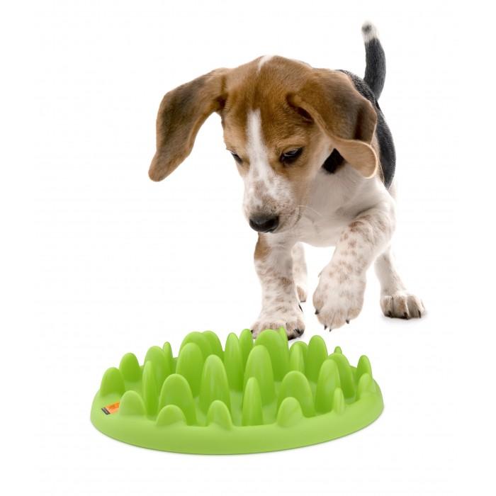 Gamelle et distributeur - Gamelle anti-glouton Northmate Green pour chiens