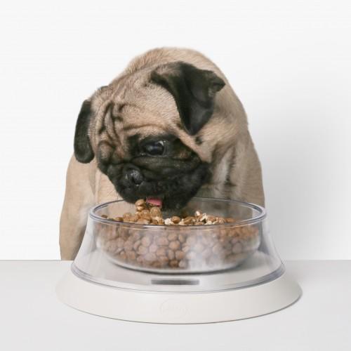 Gamelle et distributeur - Gamelle balance Volcano pour chiens