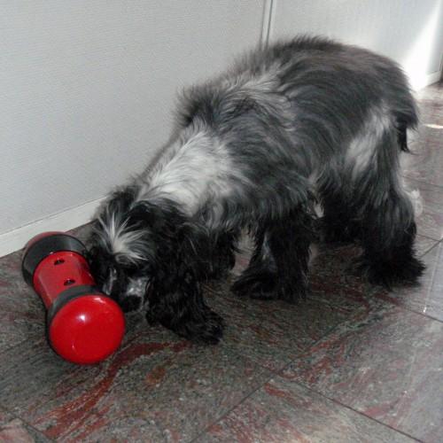 Jouet pour chien - jouet distributeur anti-anxiété Pipolino pour chien pour chiens
