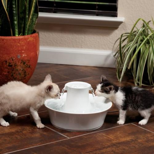 fontaine drinkwell avalon c ramique 2l fontaine et filtre pour chat et chien petsafe wanimo. Black Bedroom Furniture Sets. Home Design Ideas