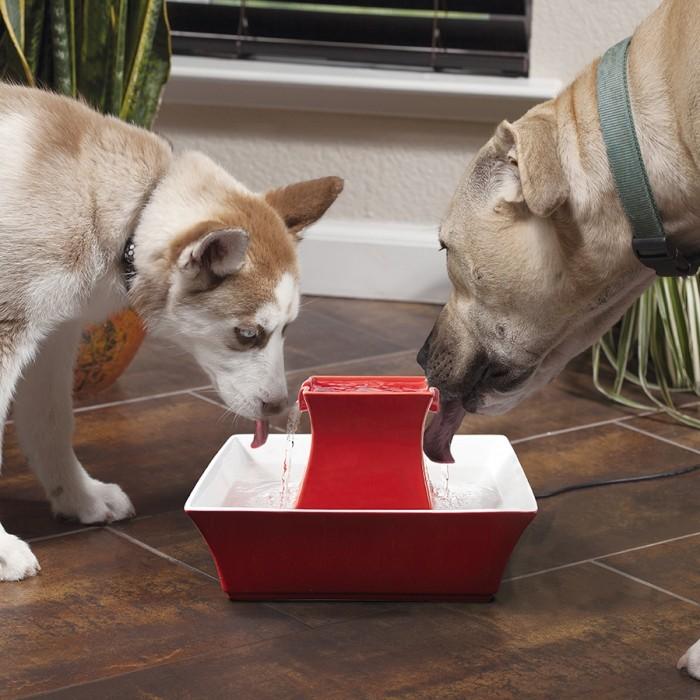 Gamelle et distributeur - Fontaine Pagoda 2L pour chiens