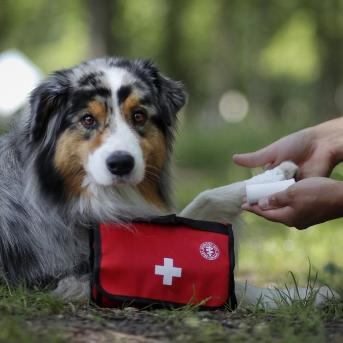 Summer Time - Set premiers soins Premium pour chiens