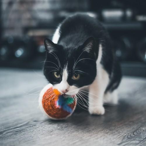 Jouet pour chat - Balle à griffer Toupie pour chats
