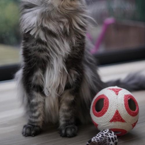 Jouet pour chat - Balle à griffer avec grelots XXL pour chats