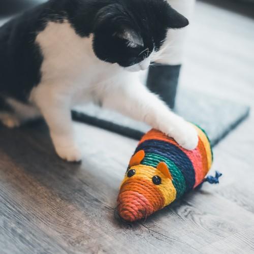 Jouet pour chat - Souris multicolore à griffer pour chats