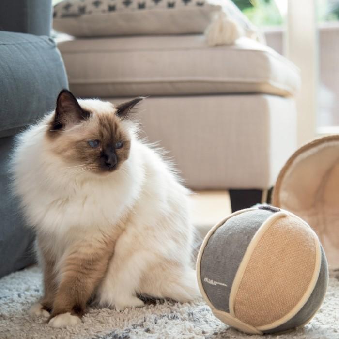 Jouet pour chat - Balle Jutis pour chats