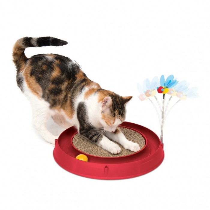 Jouet pour chat - Circuit Bee Play & Scratch pour chats