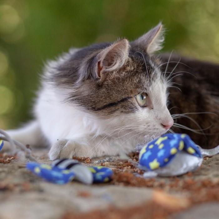 Jouet pour chat - Jouet Peluche Petit Animal pour chats