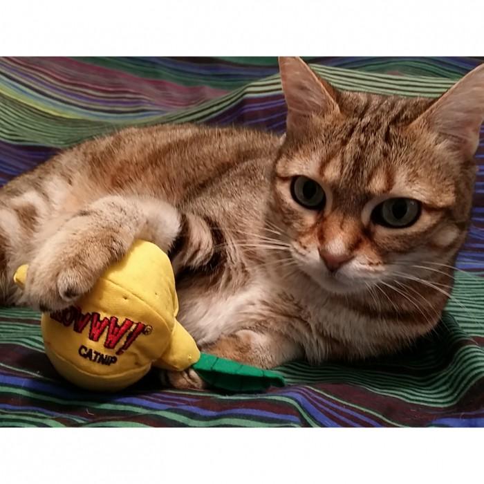 Jouet pour chat - Peluche Citron pour chats