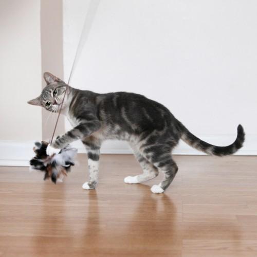 Jouet pour chat - Canne à pêche Jolly Moggy pour chats