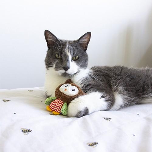 Jouet pour chat - Peluche Floppy Mini pour chats