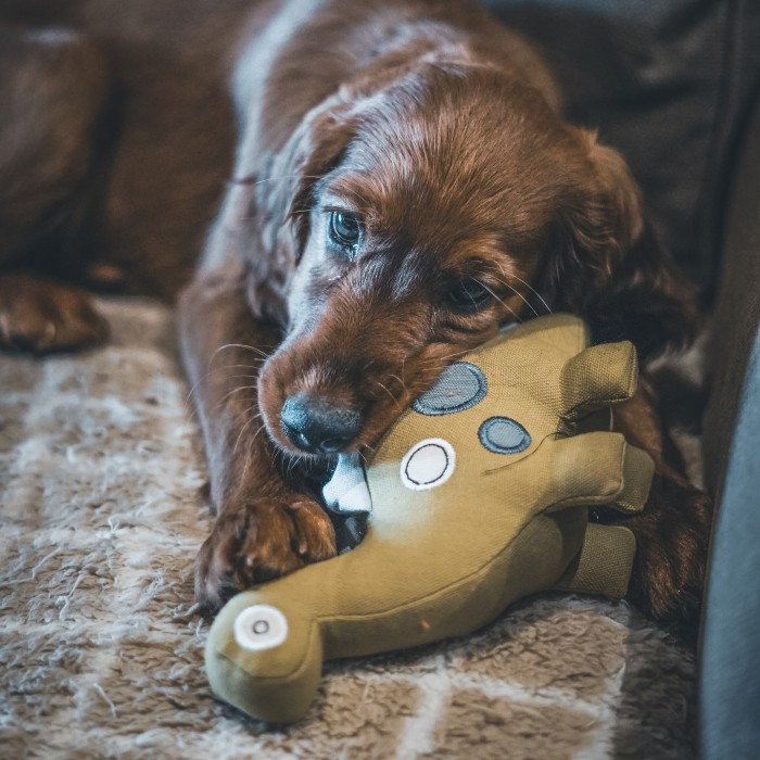 Jouet pour chien - Peluche en coton bio pour chiens