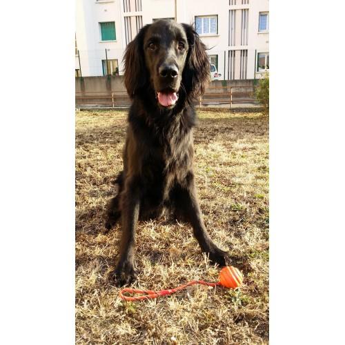 Sélection Printemps - Balle à lancer pour chiens