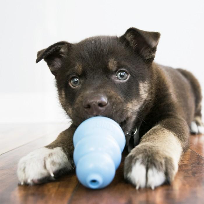 Jouet pour chien - Jouet pour chiot  KONG pour chiens