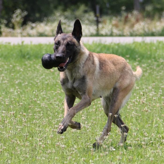 Jouet pour chien - Jouet Extreme KONG - Jouet à mâcher ultra-résistant pour chien pour chiens