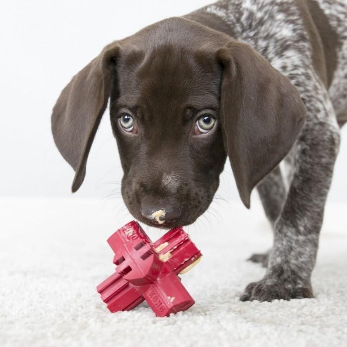 Jouet pour chien - Jouet Jump'n Jack KONG - Jouet à mâcher pour chien pour chiens