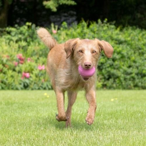Jouet pour chien - Treat Ball pour chiens