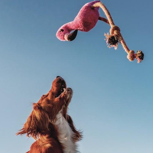 Jouet pour chien - Peluche Hemp Rope Flamingo pour chiens