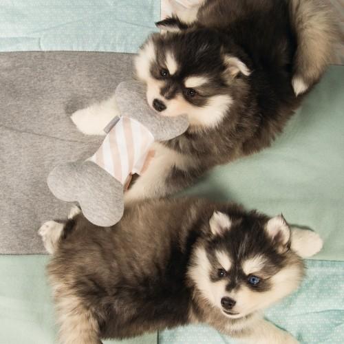 Jouet pour chien - Os en peluche pour chiens