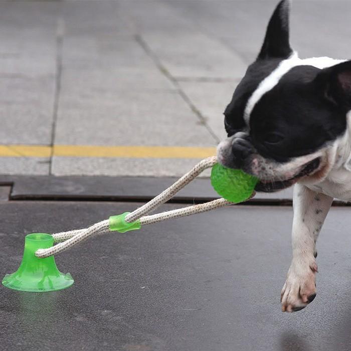 Jouet pour chien - Corde Traction à ventouse pour chiens