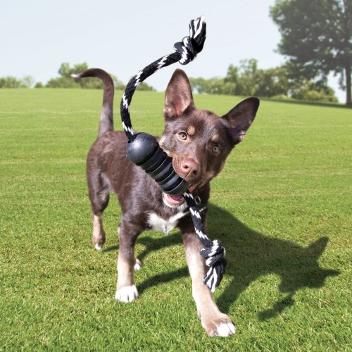 Jouet pour chien - Jouet à mâcher Dental avec corde Extreme pour chiens