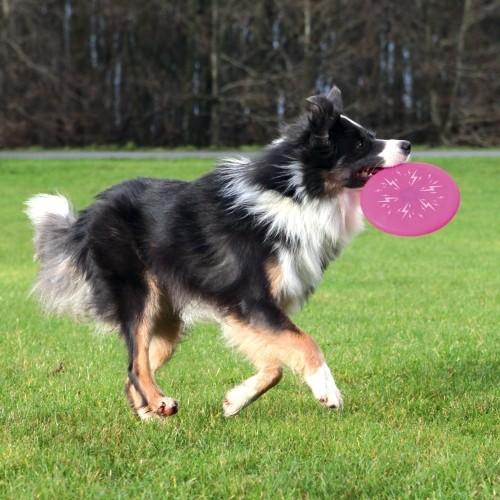 Jouet pour chien - Frisbee Flash Dog Disc pour chiens