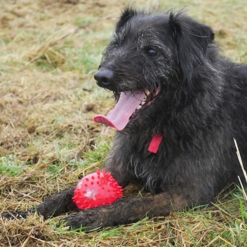 Jouet pour chien - Catch & Flash Snowball pour chiens